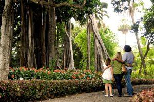 Parque García Sanabria Santa Cruz de Tenerife