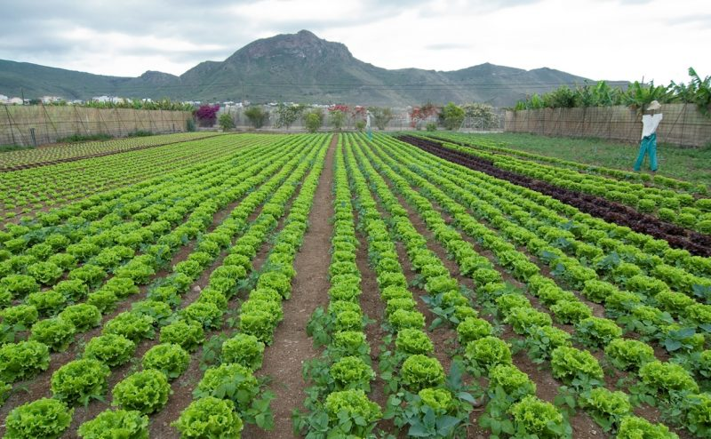 Finca ecológica situada en Valle de San Lorenzo que nutre las despensas del complejo turístico Parque Santiago.